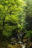 Mountain stream. Stream in Beskidy mountains, Poland royalty free stock photos