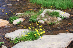 Mountain stream and blooming dandelions Stock Photography