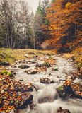 Mountain stream. In Bucegi Mountains, surrounded by trees in autumn colors Stock Images