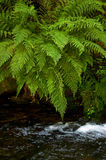 Mountain stream called the White Opava. stock photos