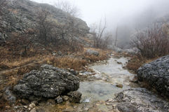 Mountain stream in canyon Stock Photography