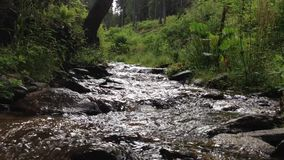 Mountain stream in the Carpathian mountains. stock video