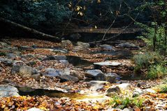 Mountain Stream Chocked with Autumn Leaves Royalty Free Stock Photos