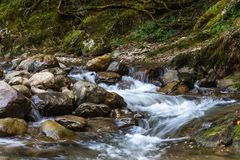 Mountain stream with clear water in the boxwood forest, Krasnodar region, Russia.  royalty free stock photo