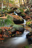 Mountain stream covered by fallen leaves Stock Photo