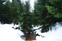 A mountain stream covered by snow Stock Photos