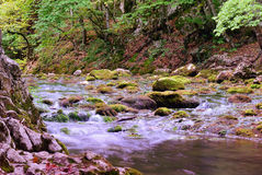 Mountain stream. Crimea Royalty Free Stock Photography