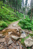 Mountain stream crosses the hiking trail Royalty Free Stock Image