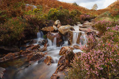 Mountain Stream Cwm Bychan Wales Royalty Free Stock Image