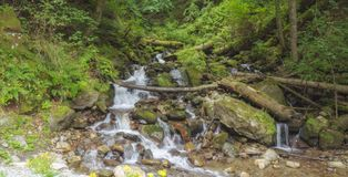 Mountain stream. Through the dam of logs and stones Royalty Free Stock Photography