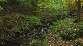 Mountain stream in the deep forest. Carpathian mountains. Crystal mountain stream. Carpathian mountains. Ukraine. Clear water flows in a mountain stream in the stock video footage