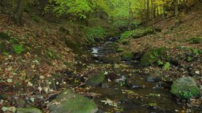 Mountain stream in the deep forest. Carpathian mountains. Ukraine. Crystal mountain stream. Carpathian mountains. Ukraine. Clear water flows in a mountain stream stock video