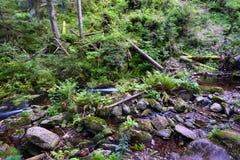 Mountain stream in a deep rocky valley Stock Photo