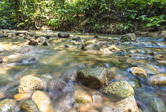 Mountain stream. In deep tropical forest Stock Images