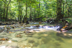 Mountain stream. In deep tropical forest Royalty Free Stock Image