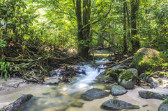 Mountain stream. In deep tropical forest Royalty Free Stock Images