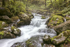 Mountain stream in the dense forest Stock Images