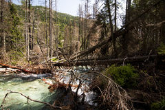 Mountain stream  and Destroyed trees in forest Stock Image