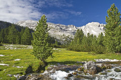 Mountain stream in the Dolomites Royalty Free Stock Image