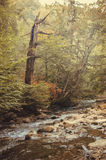 Mountain stream and a dry tree on the shore Stock Image
