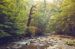 Mountain stream and a dry tree on the shore Stock Photos
