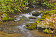 Mountain Stream in Early Morning Stock Photography