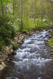 Mountain Creek in the Spring Royalty Free Stock Images