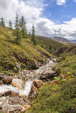 Mountain stream in East Sayan mountains. Royalty Free Stock Photography