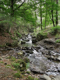 Mountain stream in the English Lake District Royalty Free Stock Photo