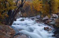 Mountain stream at fall. Utah mountains Royalty Free Stock Photography