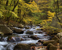 Mountain stream in fall Royalty Free Stock Images