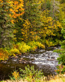 Mountain stream in fall Royalty Free Stock Photo