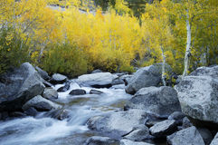 Mountain Stream, Fall Colors. Aspen trees in the fall along a mountain stream in the owens valley Stock Photography