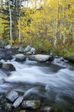 Mountain Stream, Fall Colors Stock Photos