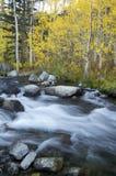 Mountain Stream, Fall Colors. Aspen trees in the fall along a mountain stream in the owens valley Stock Photos