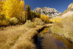 Mountain Stream, Fall Colors. Aspen trees in the fall along a mountain stream in the Owens Valley Royalty Free Stock Image
