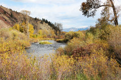 Mountain Stream with Fall Colors. Autumn colors frame this beautiful mountain stream in Idaho Royalty Free Stock Photo