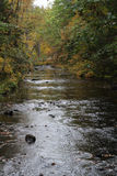 Mountain stream with fall foliage Stock Photos