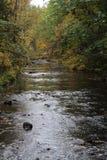 Mountain stream with fall foliage Stock Photos