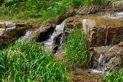 The mountain stream, falling water and green grass Stock Image