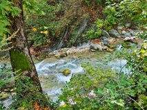Mountain Stream. A fast running stream through a mountain forest. Actual location the Pindus Mountains, Greece Stock Image