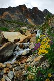 Mountain stream and flowers royalty free stock images