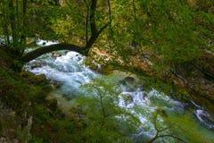 Mountain stream flowing through gorge, Slovenia. Mountain stream flowing through gorge. Vintgar Gorge near Bled, Triglav National park, Slovenia Royalty Free Stock Photos