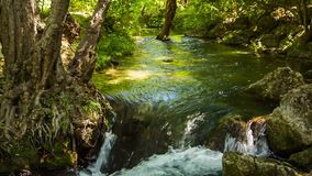 Mountain Stream Flowing In Green Forest. Tracking shot of picturesque scenery - mountain river peacefully flowing in green forest among trees and stones stock footage