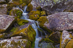 Mountain stream flowing among the mossy stones. Stock Photography