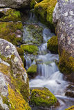 Mountain stream flowing among the mossy stones. Stock Images