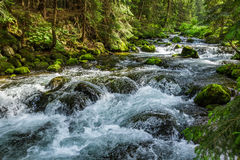 Mountain stream flowing between mossy stones. In summer Stock Image