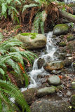 Mountain Stream Flowing Through Rainforest Floor, Capilano, Canada. Long Exposure of a Mountain Stream Flowing Through Rainforest Floor near Capilano Park stock image