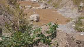 Mountain stream flowing through stones stock video footage