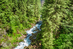 Mountain stream flowing through the trees in the mountains Stock Photos